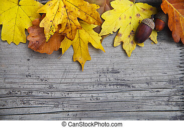 ghiande, foglie, quercia, autunno, fondo, acero