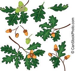ghiande, foglie, rami quercia