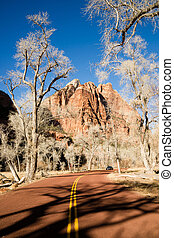Ghostly Ominius Trees Devoid of Leaves Road to Zion