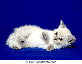 giù, carino, posa, gattino