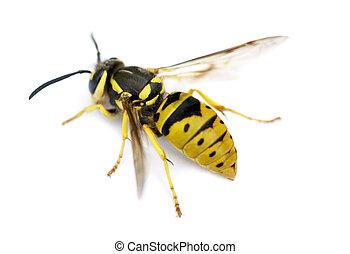 giacca gialla, vespa