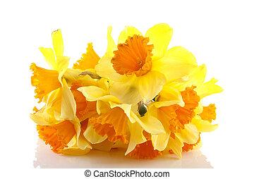 Narciso fiore giallo fiore sopra colore giallo for Narciso giallo