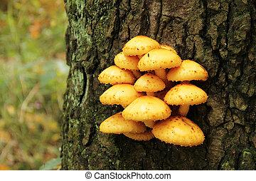 giallo, fungo, su, il, albero