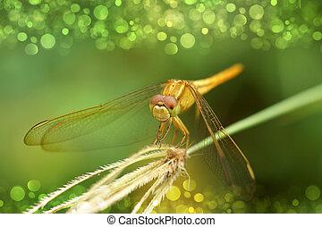 giallo, libellula, su, erba