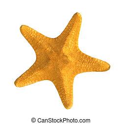 giallo, starfish, isolato, bianco