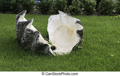 giant clam in green grass - giant clam from the sea now in...