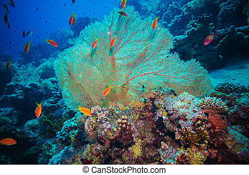 Giant fan (gorgonian) in the currenton Red Sea reef underwater