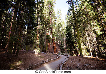 Giant Forest Sequoia National Park