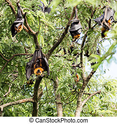 giant fruit bat on tree