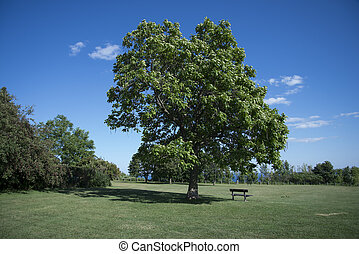 Giant Green Tree in Park with Bench - Giant Green Tree in...