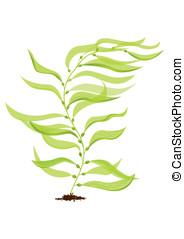 Giant kelp: vector - Vector algae against white background