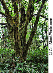 Giant Moss-Covered Tree