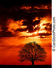 Giant oak tree at sunset