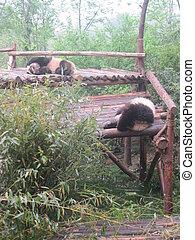 Giant Panda Research Base in China