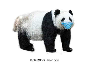 Giant Panda with surgical mask