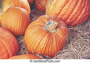 Giant pumpkin in the farm