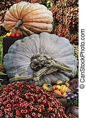 Giant pumpkins at autumn exhibition in the botanical garden