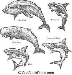 Giant sea animals shark whales vector sketch icons