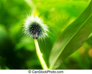 Giant shaggy caterpillar.