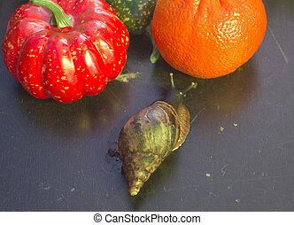 giant snail to choose between pumpkin and Mandarin