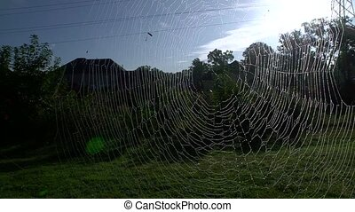 giant spider web - Wide shot of a huge spider web with...