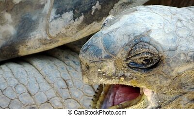giant tortoise close up - Reptiles world. Portrait of a...