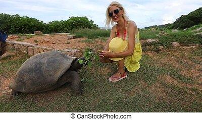 Giant tortoise feeding - SLOW MOTION: caucasian happy...