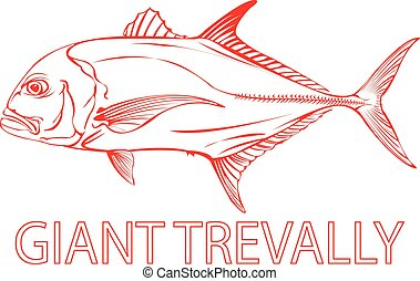 Giant Trevally. - Outline of a Giant Trevally fish.