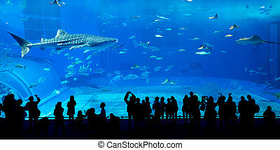 Giant whale shark in Aquarium
