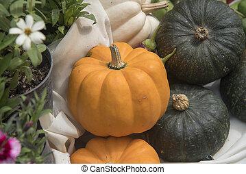 giants pumpkin