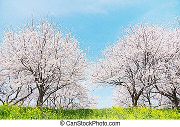 giapponese, primavera, scenics