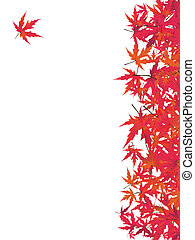 giapponese, rosso, maple., eps, 8