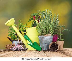 giardinaggio, esterno, attrezzi, erbe