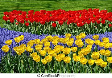 giardini fiore, letto, keukenhof