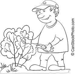 giardiniere, tagli, uno, cespuglio, contorno