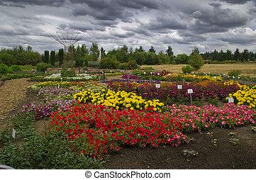 giardino, in, uno, tempesta