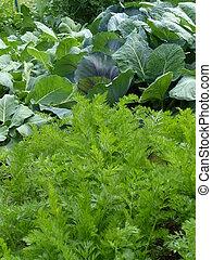 giardino, organico