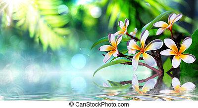 giardino zen, con, frangipani