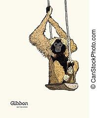 gibbon, vecteur, croquis, singe, graphique, drawing.