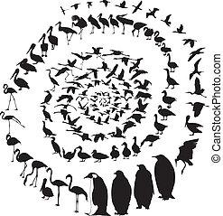 gibier eau, spirale, oiseaux