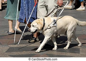 gids hond