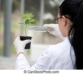 gießen, blume, flüssiglkeit, pflanzenkeim, topf, biologe