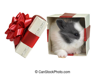 white fluffy rabbit sits in box for gift
