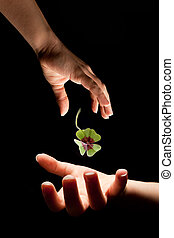 Gift of luck - Hand giving a shamrock or clover of luck to ...