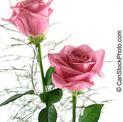 Gift Roses 2 - Beautiful gift arrangement of two pink roses...