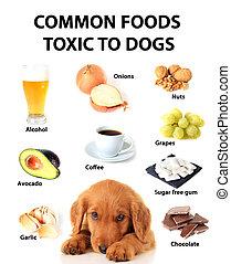 giftig, essen, hunden