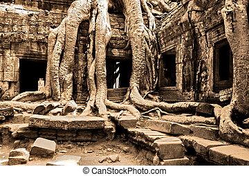 gigante, árbol, cubierta, ta, prom, templo