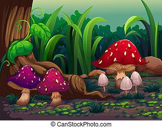 gigante, cogumelos, em, a, floresta