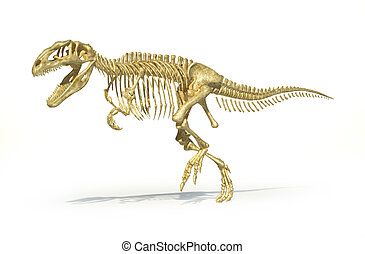 Gigantosaurus dinosaurus full photo-realistic skeleton, scientifically correct. Perspective view, On white background with clipping path.