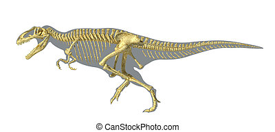 Gigantosaurus dinosaurus full photo-realistic skeleton, scientifically correct, on body silhouette. On white background with clipping path.